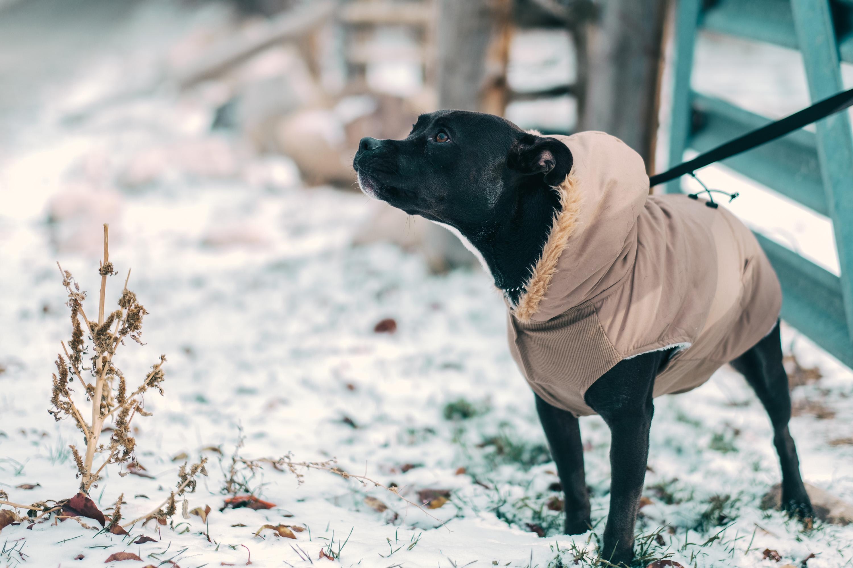 90cbd8b724000 Pies na urlopie – odkryj tysiące miejsc przyjaznych psom!